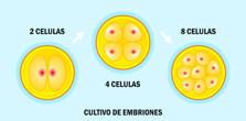 Cultivo de Embriones